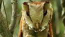bay-owl