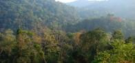 Thai forest